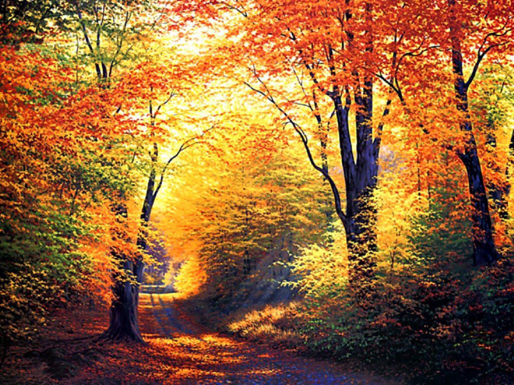 krajobrazy-lasy-1680-1260-3880
