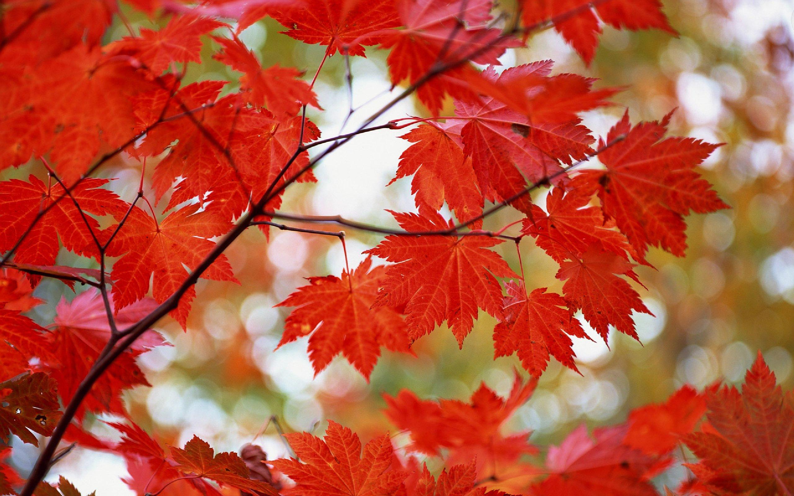 Золотая осень картинки фото 6