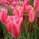 Цветы из бисера форум.