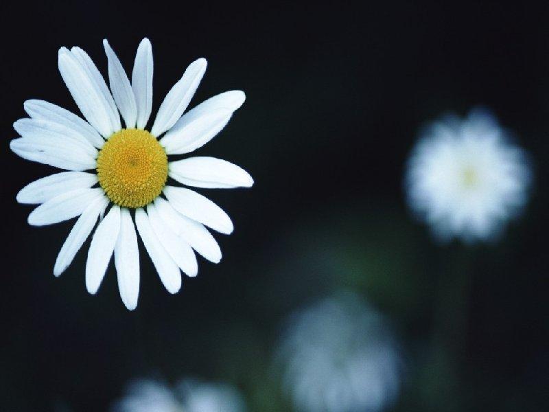 http://www.mega-tapety.info/resize/przyroda-kwiaty-800-600-2738.jpg