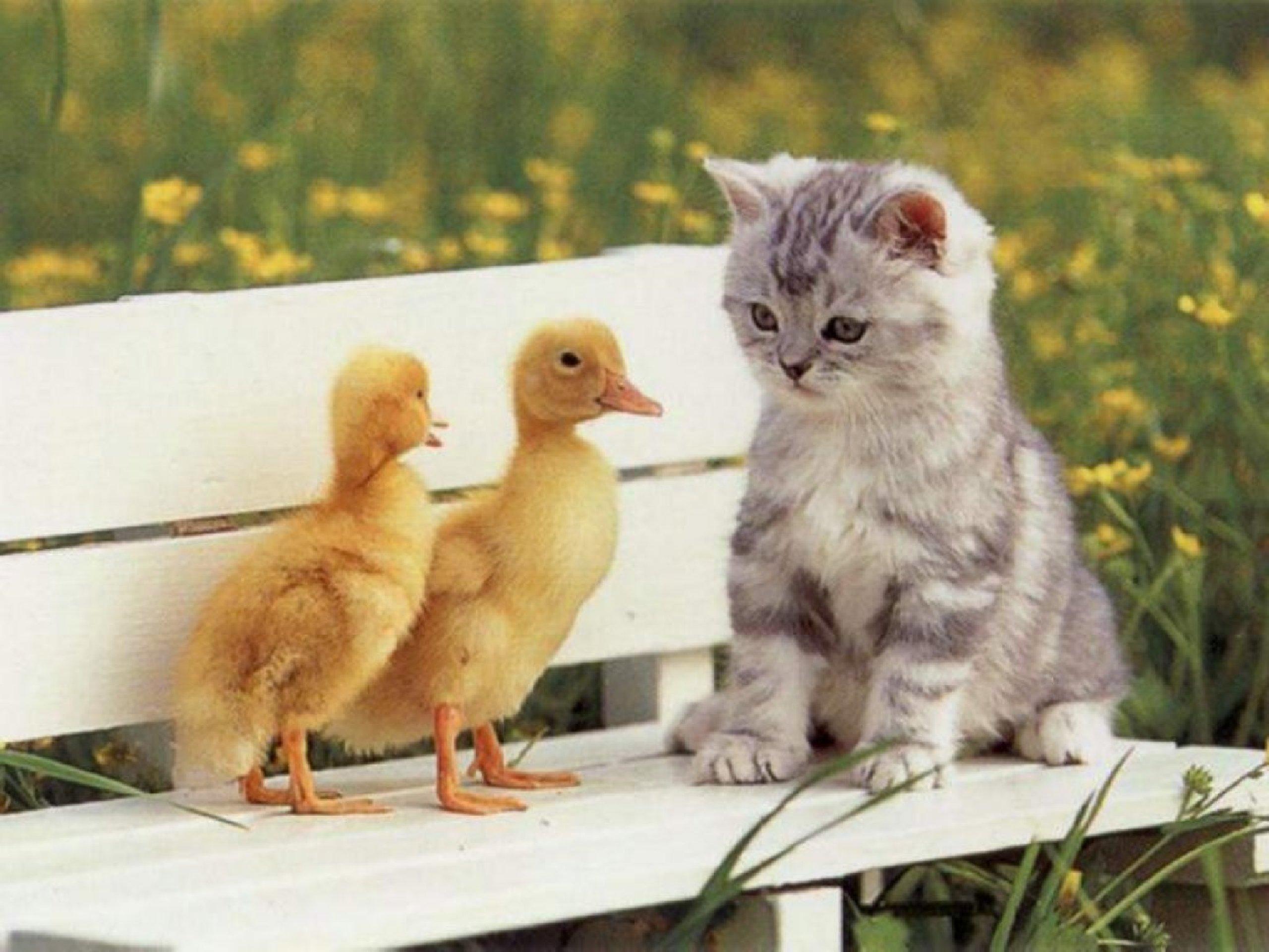 Tapety -> Zwierzęta -> Koty
