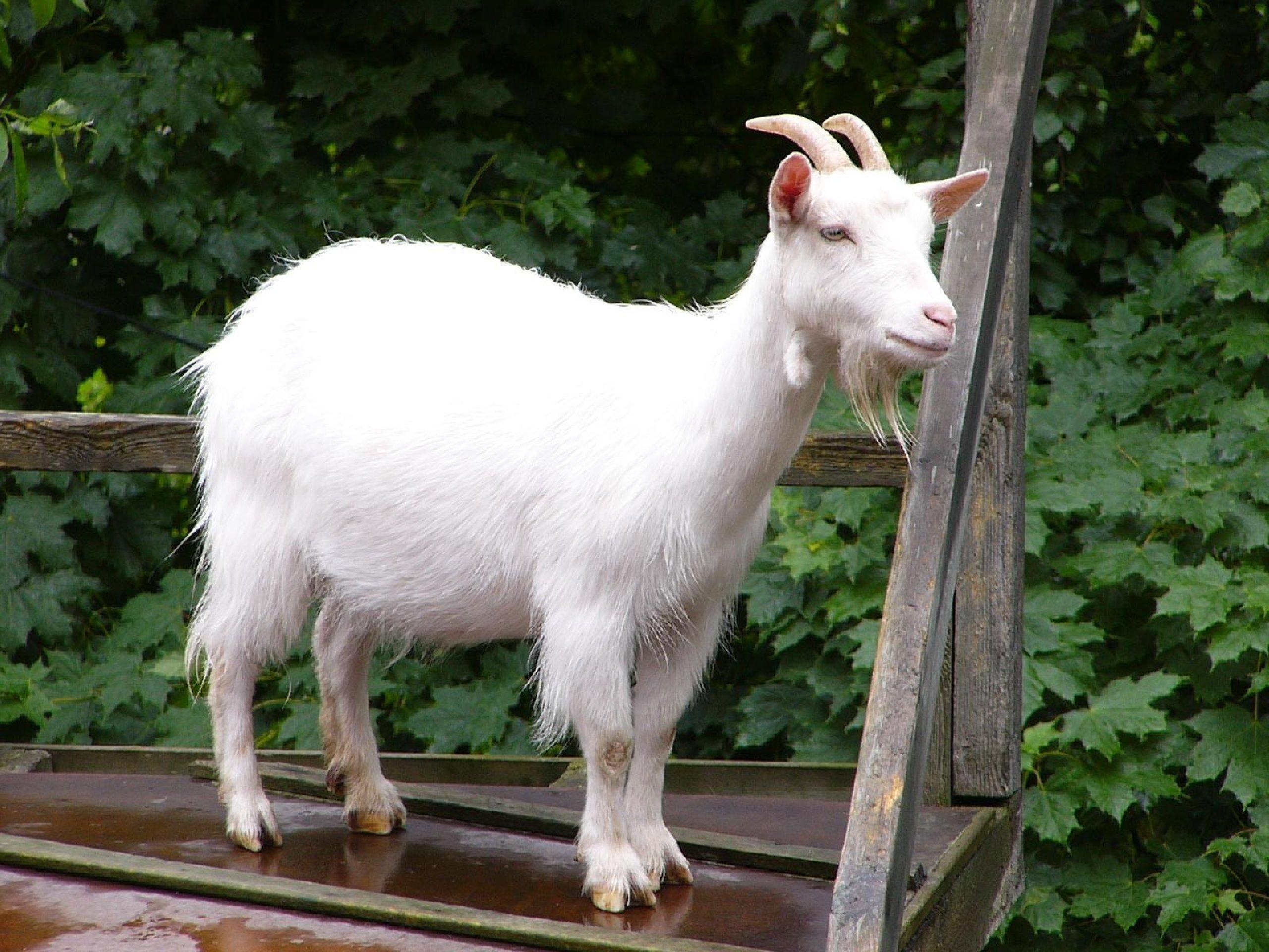 Трещина козы фото 20 фотография