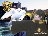 hp_harry_potter02
