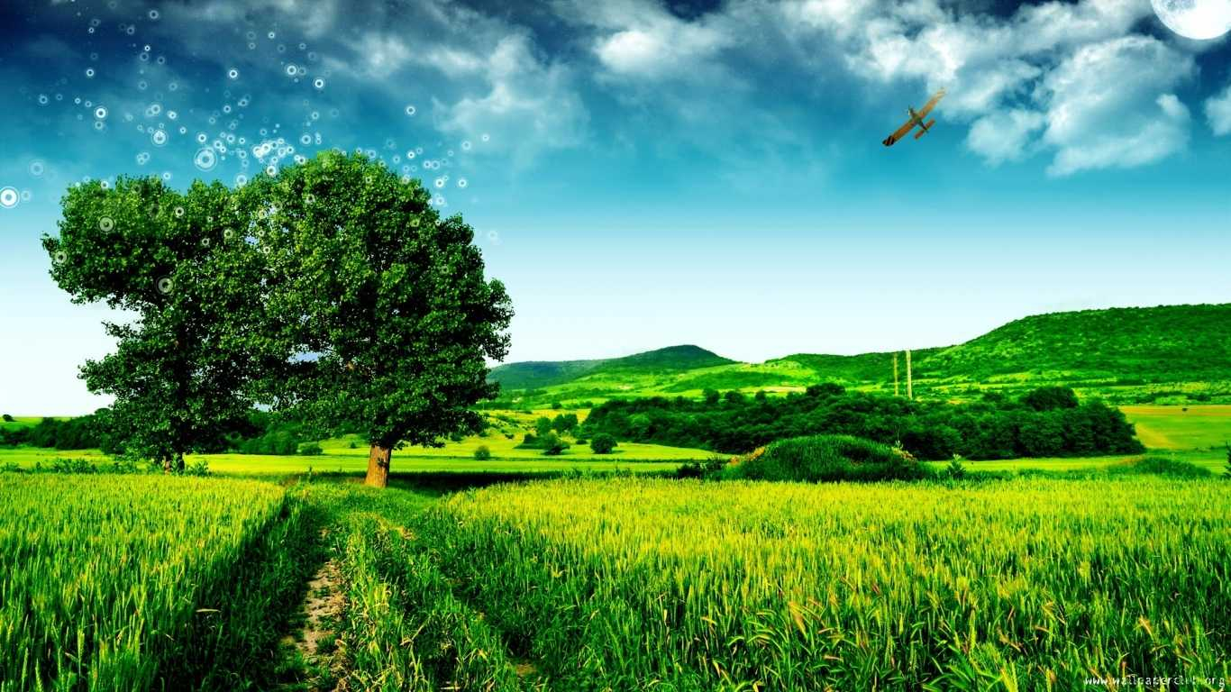 Krajobrazy   Polaipustynie   Magiczne Drzewo
