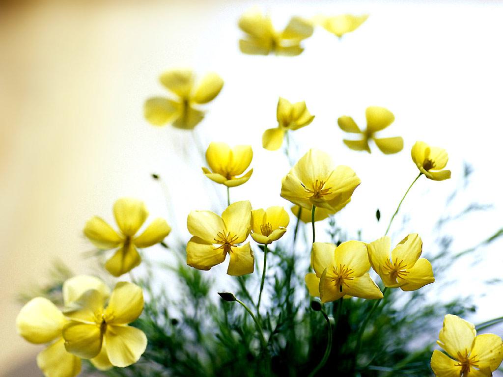 kwiaty_74.jpg