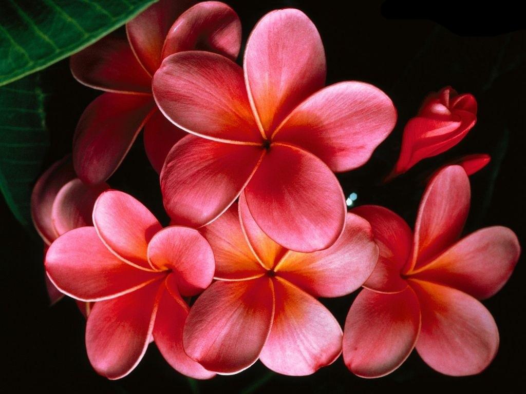 przyroda - kwiaty - tapety_kwiaty