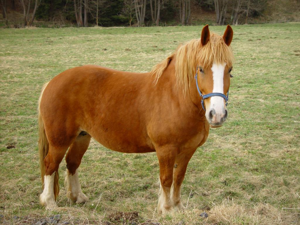 Tapety Zwierzęta Konie