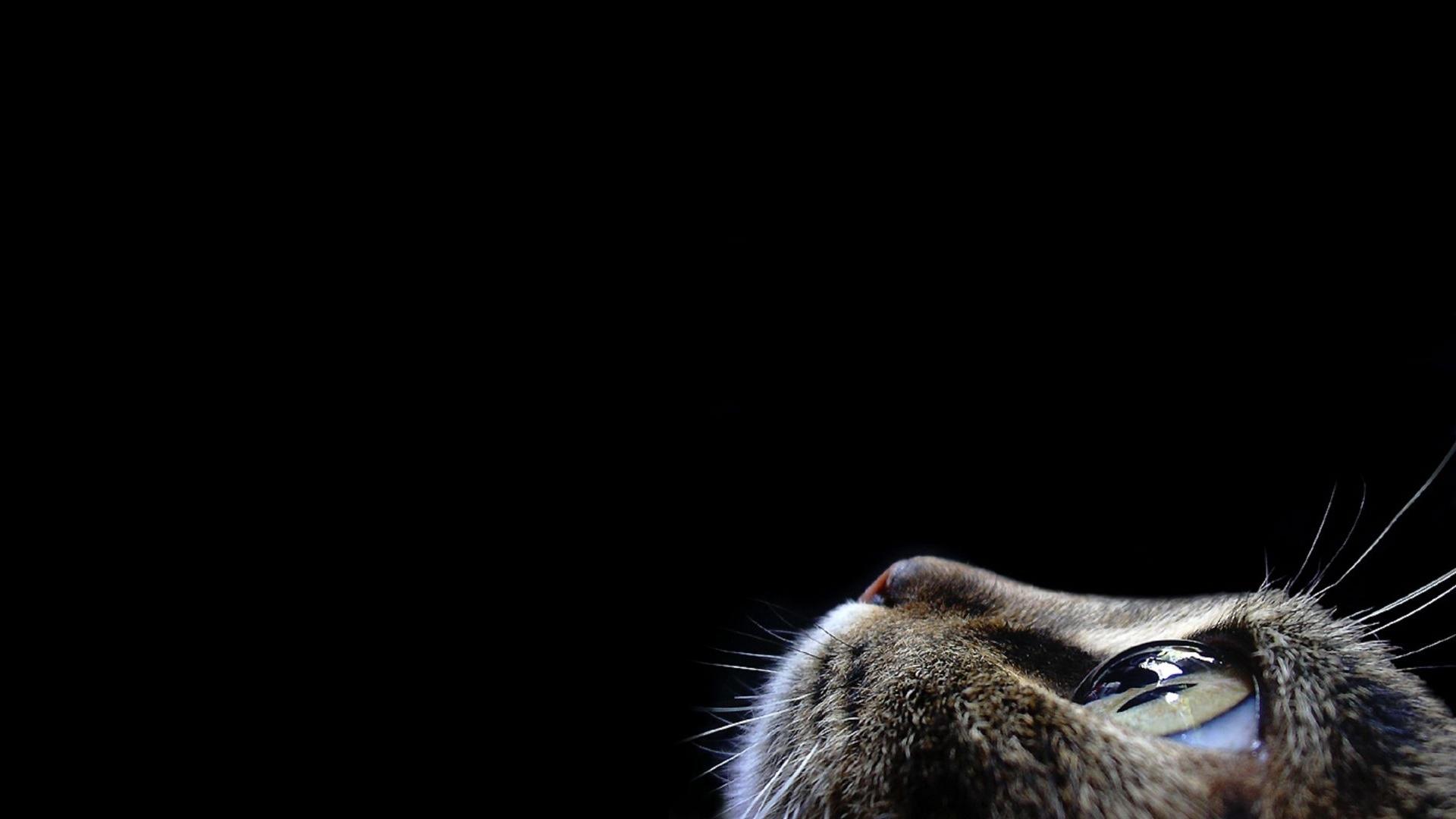 Tapety Zwierzęta Koty
