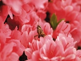 bug_in_red_flowers-1920x1200