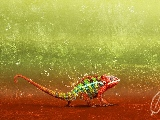 colorful_chameleon-1920x1200