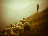 shepherd_in_romania-1920x1080