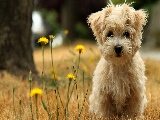 puppy_in_the_field-1920x1080
