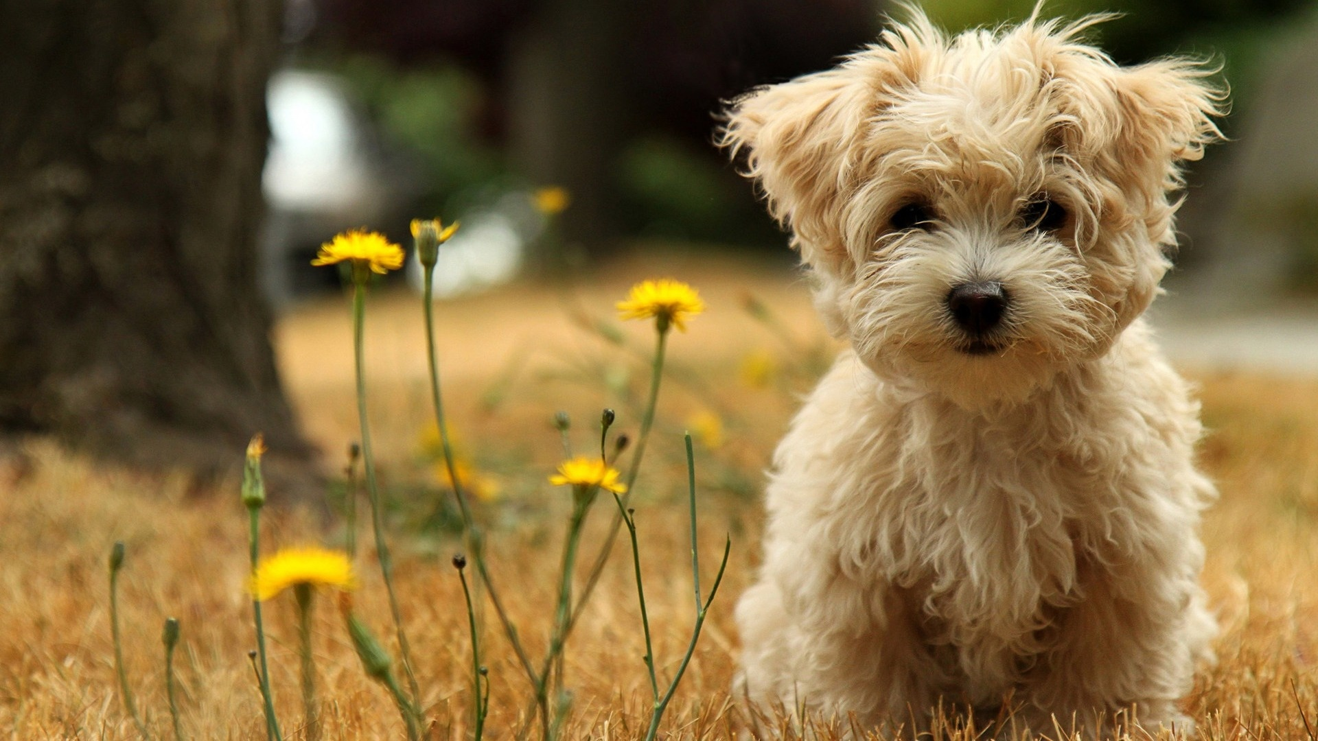 zwierzeta - psy - puppy_in_the_field-1920x1080