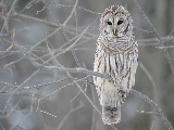 white_owl_in_a_tree-1920x1200